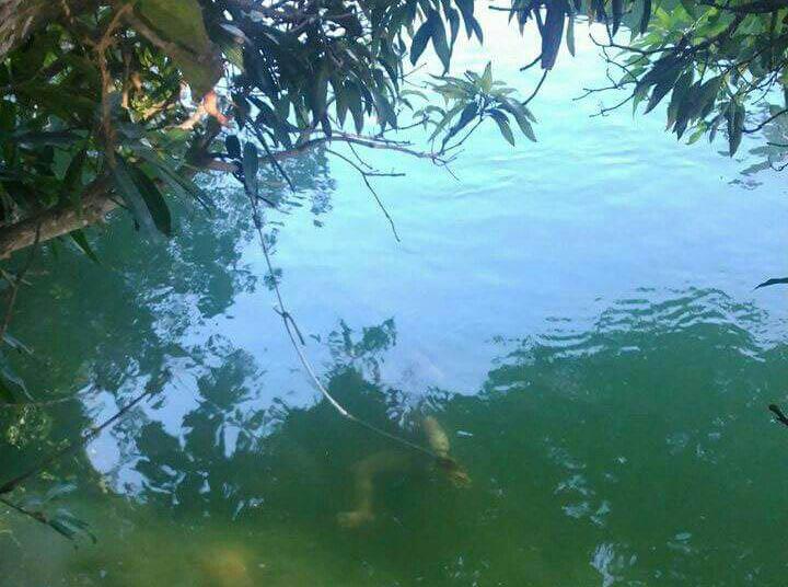 menina amarrada rio Brejo Grande Sergipe